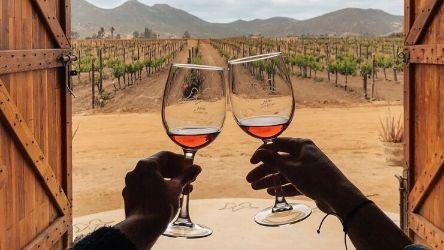 Platicas y Pruebas: Wines of the Valle de Guadalupe
